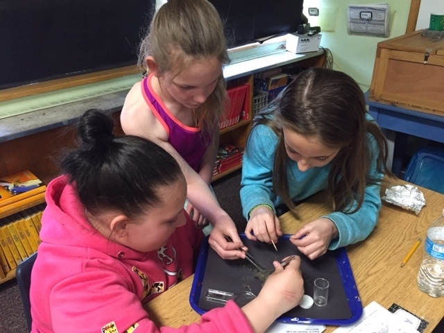 A group of girls dissecting an owl pellet.